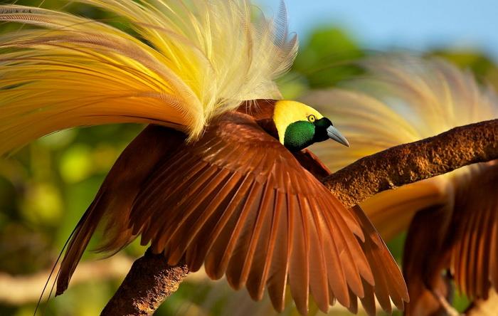 Редкие птицы мира